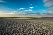 Arable land field — Stock Photo