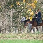 horse ride — Stock Photo #57787719