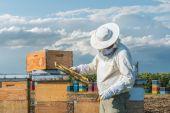 Lavoro di apicoltore — Foto Stock