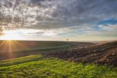 Winter wheat field  — Stock Photo
