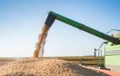 Harvesting of soybean — Stock Photo