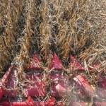 Harvesting of corn — Stock Photo #67782921
