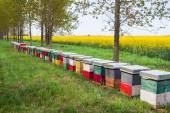 Hive in a field  — Stock Photo