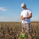 Farmer in soybean fields — Stock Photo #82884916
