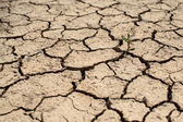 Cracked Ground, Cracked Texture, cracked soil — Stock Photo
