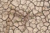 Cracked Ground, Cracked Texture, cracked soil — Stock Photo