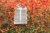 White window with autumn felling background — Stock Photo