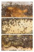 Beehive frames of honey bees — Stock Photo