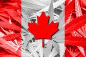 Canada Flag on cannabis background. Drug policy. Legalization of marijuana — Stock Photo