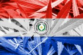 Paraguay Flag on cannabis background. Drug policy. Legalization of marijuana — 图库照片