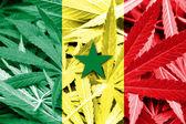Senegal bayrak esrar arka plan üzerinde. Uyuşturucu politikası. Marihuana yasallaştırma — Stok fotoğraf