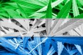 Sierra Leone Flag on cannabis background. Drug policy. Legalization of marijuana — Stock Photo