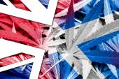 Scotland and United Kingdom Flag on cannabis background. Drug policy. Legalization of marijuana — Stockfoto