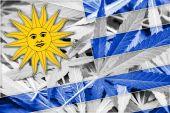 Uruguay Flag on cannabis background. Drug policy. Legalization of marijuana — Stock Photo