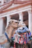 Camel in Al Khazneh - Treasury, Petra — Stock Photo