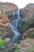 Walter Sisulu National Botanical Garden, Johannesburg, South Afr — Stockfoto