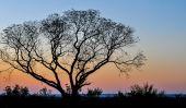 Arbre africain au coucher du soleil, Zambie — Photo