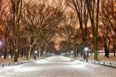 Central Park Night, New York City — Φωτογραφία Αρχείου