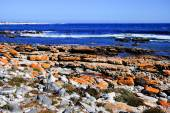 Shipwreck - Cape of Good Hope - South Africa — Stock Photo