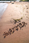 The word summer written in sand — Stock Photo