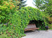 Bench under curly thickets of wild grapes — Stock Photo