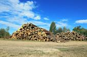 Logs in the logging — Stock Photo