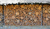 Old firewood shed and a lot of chopped logs — Stock Photo