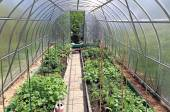 Growing vegetables in greenhouses — Stock Photo