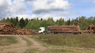 Harvesting timber logs in a forest in Russia — Vídeo stock