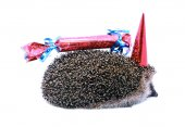 Petit hérisson de forêt dans un chapeau de fête et avec un cadeau isolé — Photo