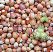 Background of the plurality of hazelnut — Stock Photo