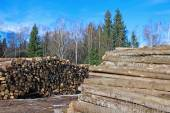 Harvesting timber logs in a forest in winter — Stock Photo