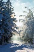 冬の最初の雪 — ストック写真