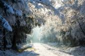 The first snow in the winter — Stock Photo