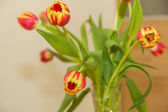A bouquet of tulips  — Stock Photo