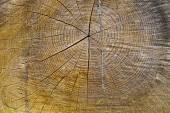 Texture of oak — Stock Photo