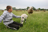 Boy on meadow with cattle — Stock Photo