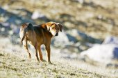 Half breed dog standing in field — Stock Photo