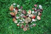 Wild mushrooms arranged in heart shape — Stock Photo