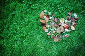 Wild mushrooms displayed in heart shape — Foto Stock