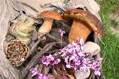Boletus wild mushrooms in forest — Foto de Stock
