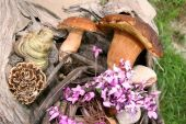 Boletus wild mushrooms in forest — Stockfoto