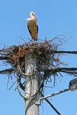 White stork nest on electric pole — Stock Photo