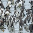 Group of penguins on shore — Stock Photo #66138863