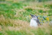 Penguin in high grass on meadow — Stock fotografie