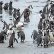 Penguins standing on shore in Chile — Stock Photo #66140775