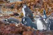 Penguins on shore among leaves — Stock Photo