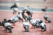 Pigeons standing — ストック写真