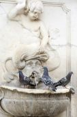 Three pigeons on water fountain — Stock fotografie