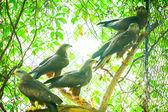 Hawks on branch — Stock Photo